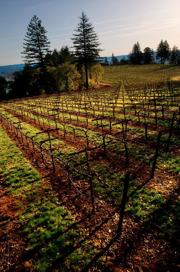 Howell Mountain Vineyards View Lamborn Napa
