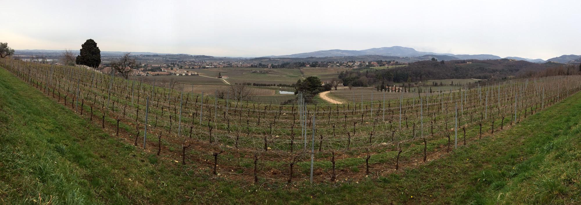 Looking west into the Negrar Valley in the Classico region of Amarone della Valpolicella - Vineyard photo by Wine Folly