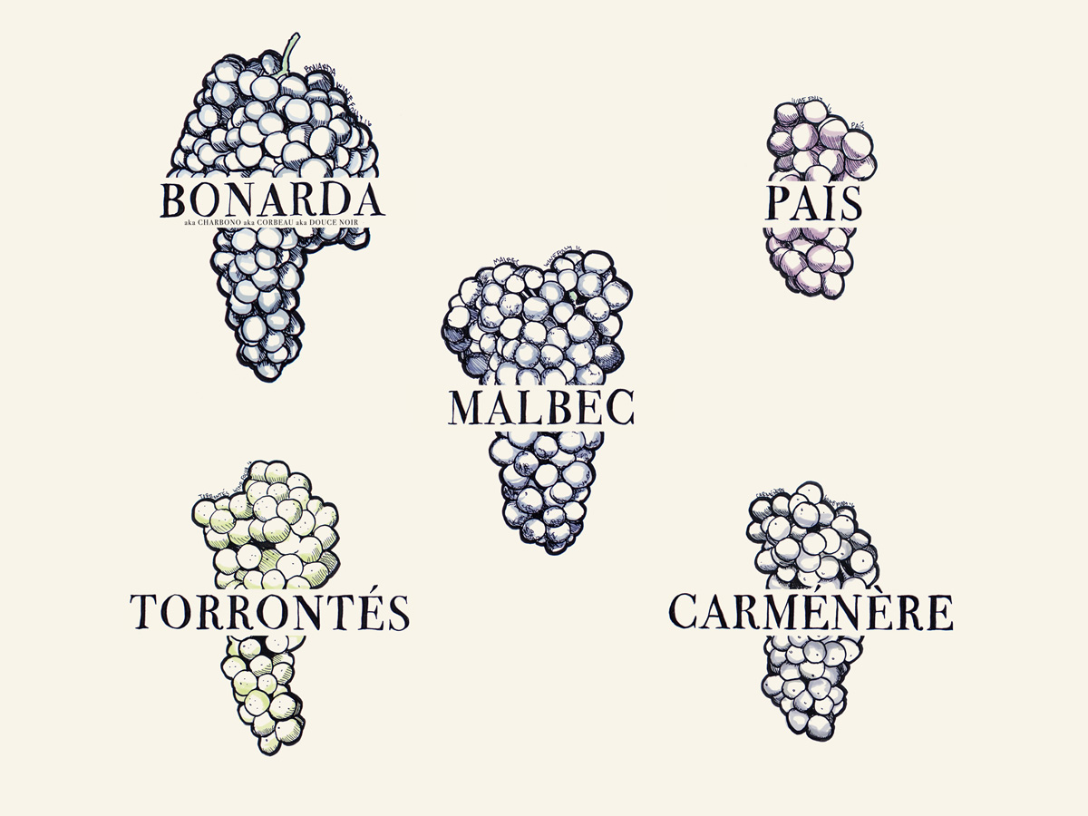 South American wine grapes to know