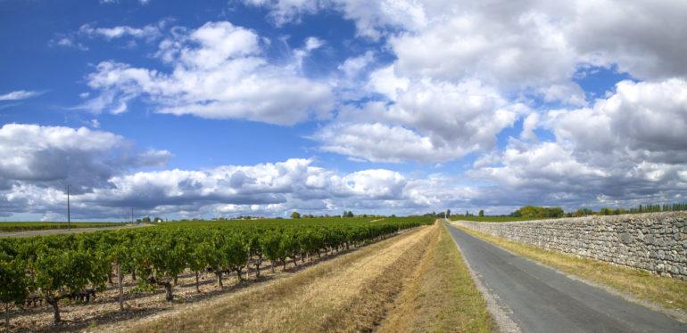 Bordeaux-vineyards-Medoc-2012