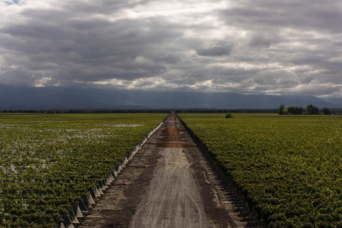 valle-uco-mendoza-vineyards-argentina-danicho