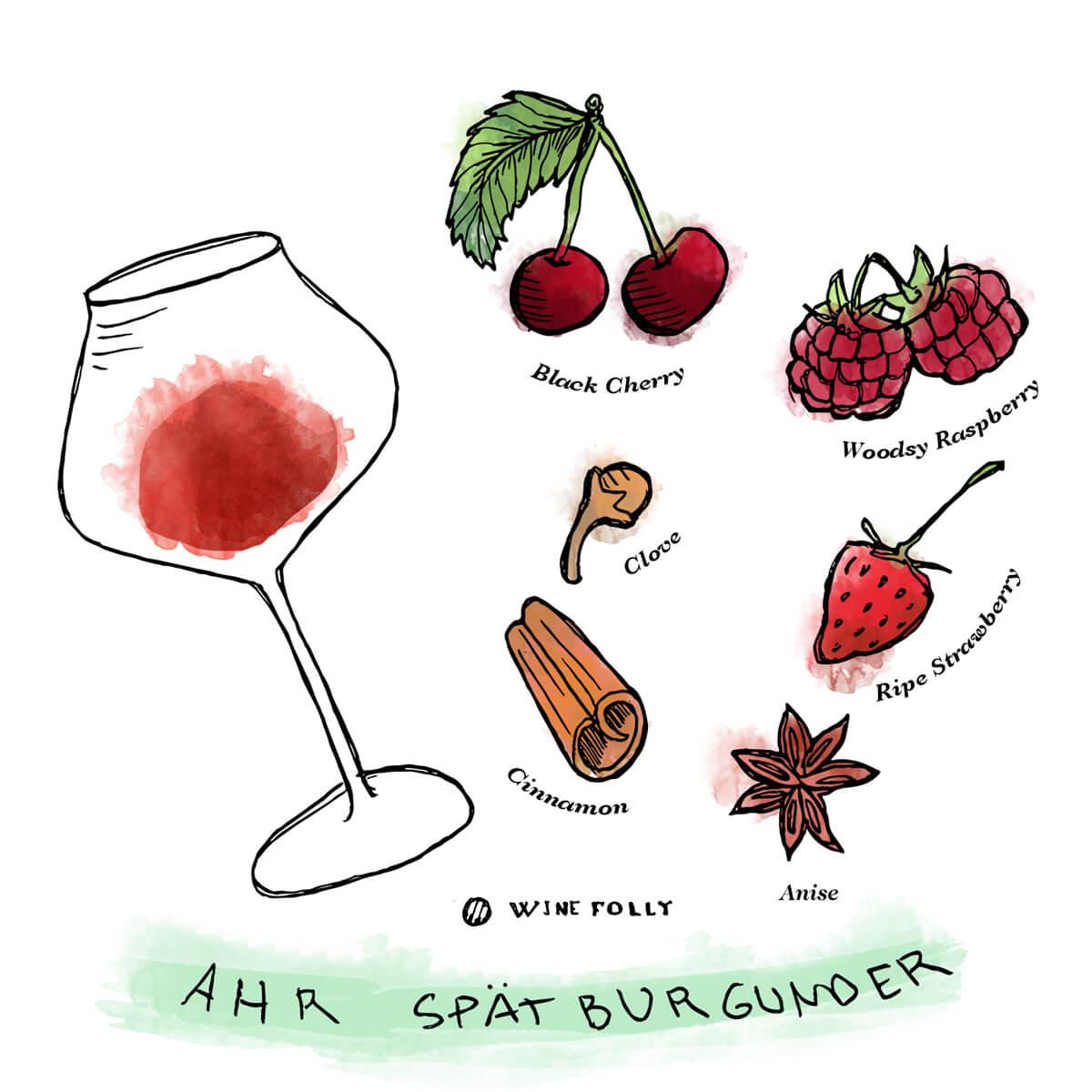 Ahr-Pinot-Noir-Spatburgunder-Tasting-Notes-WineFolly-Illustration