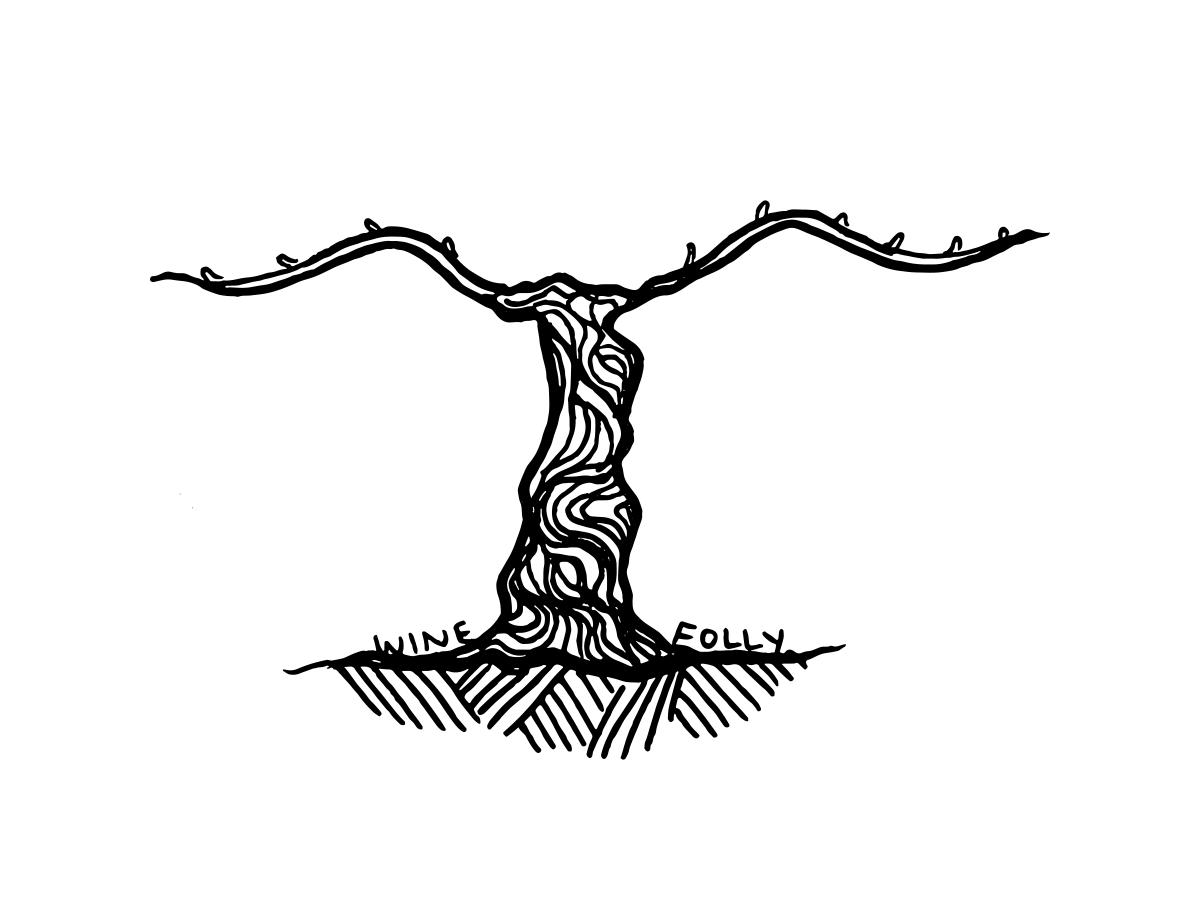 grape-vine-illustration-winefolly