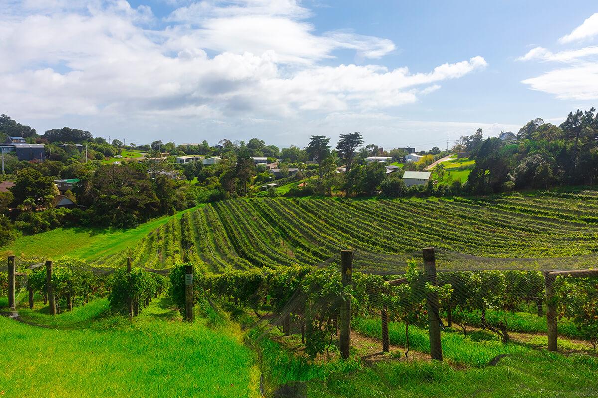 jon-moore-vineyard-auckland-new-zealand