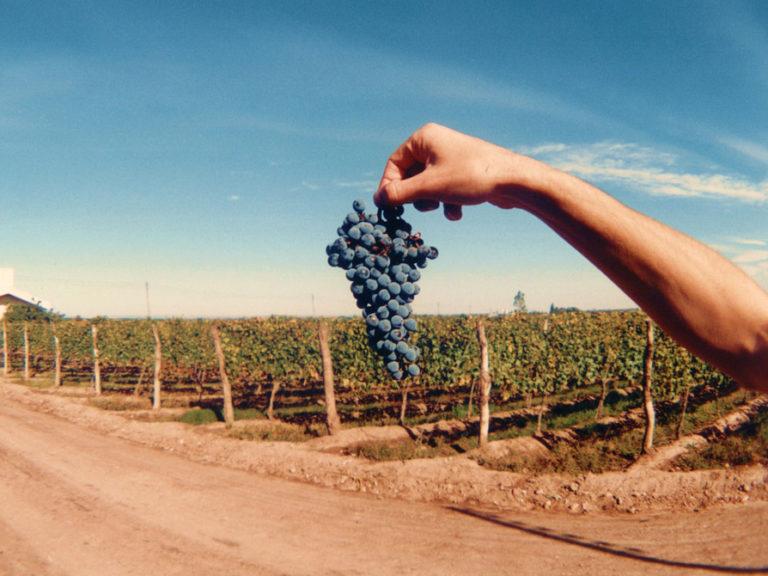 mendoza-malbec-vineyards-and-grapes-winefolly