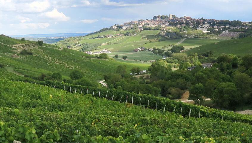 sancerre-delaporte-sauvignon-blanc-vineyards2