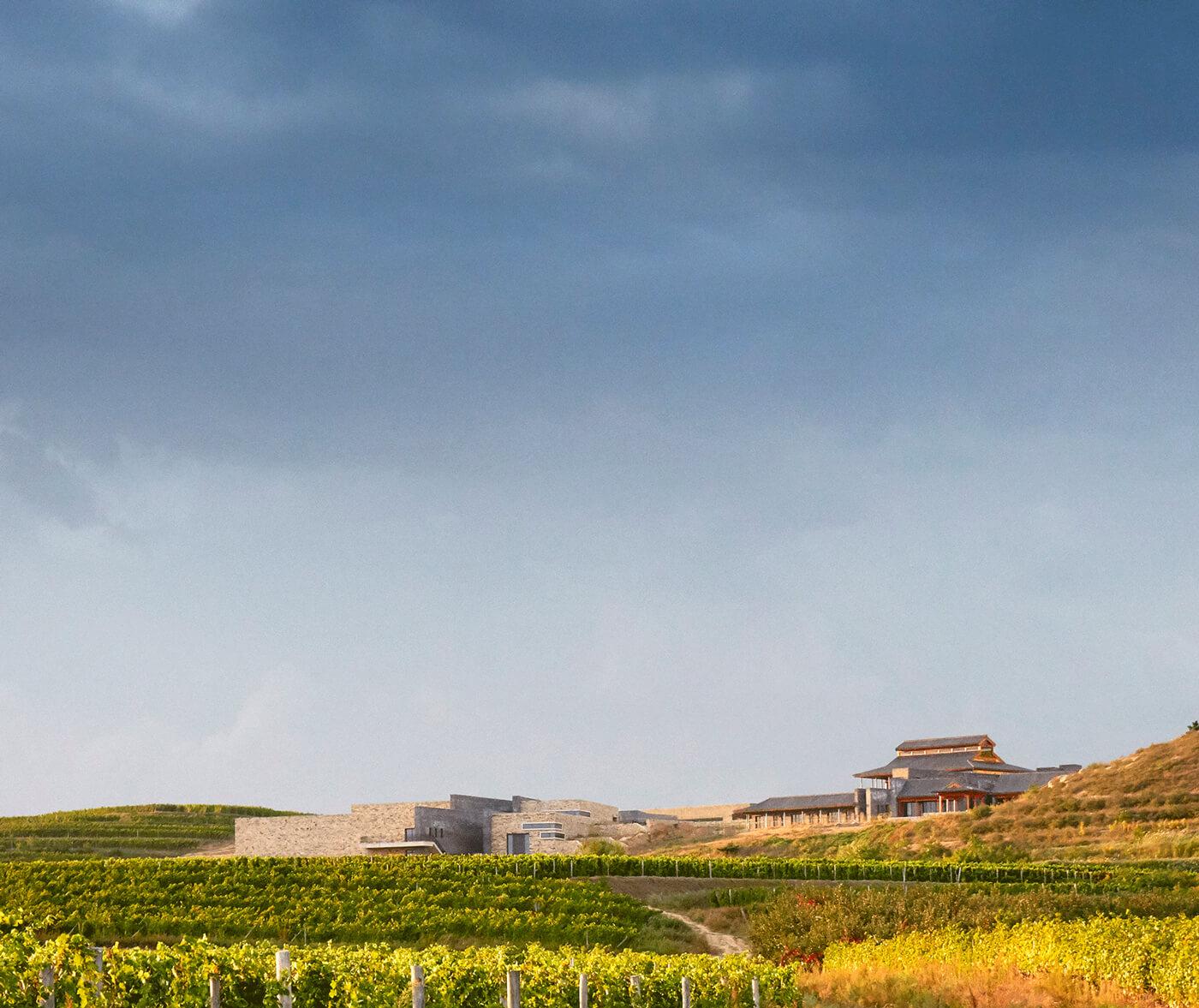 domaine-de-long-dai in China's Penglai - Yantai wine region
